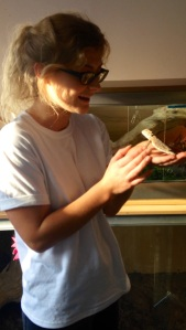 A Bearded Dragon in Eden Aquatics and Reptiles